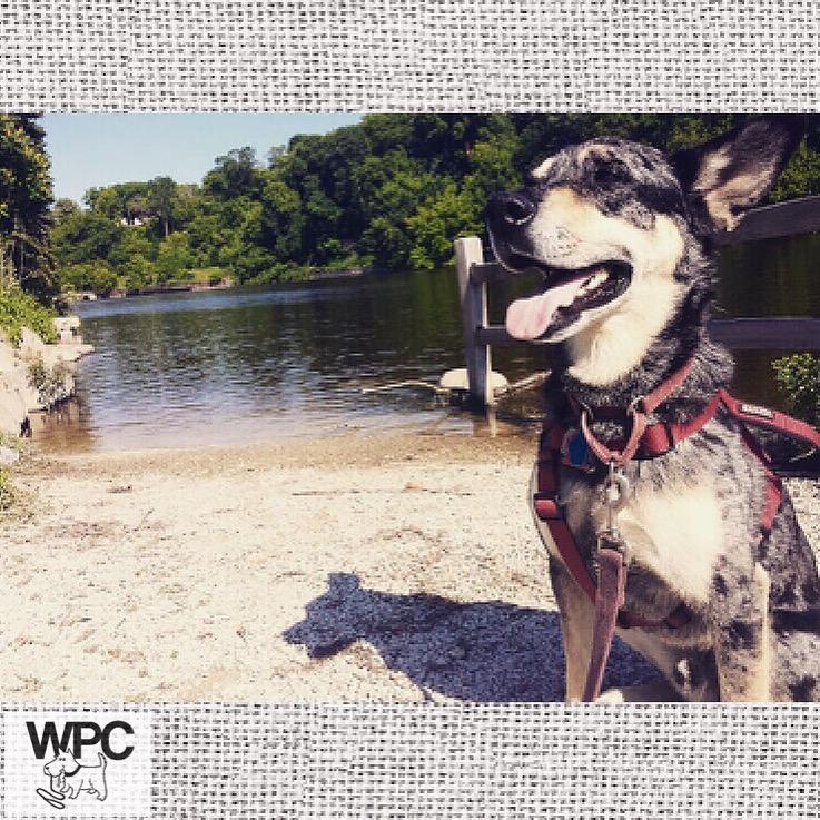 Dog swim dog walking Milwaukee