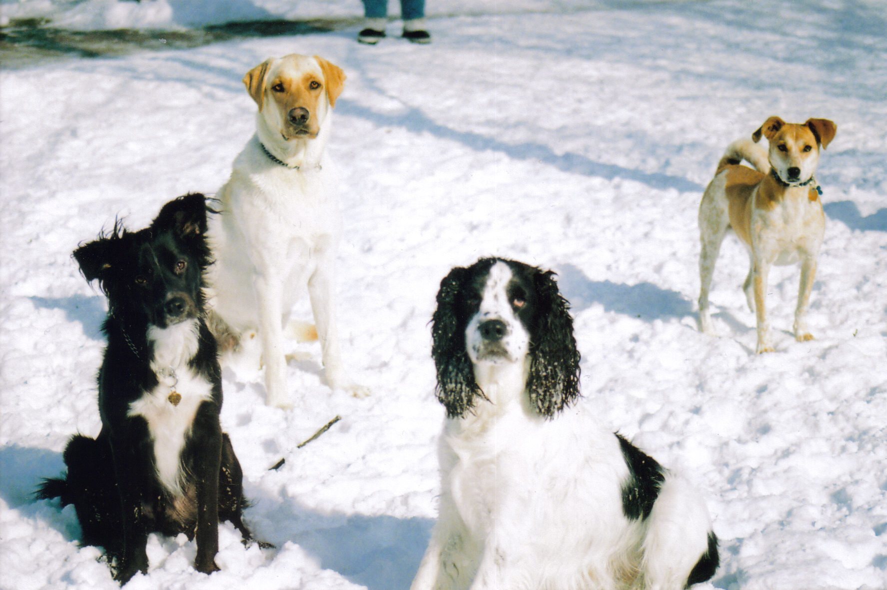 Image result for dogs in snow