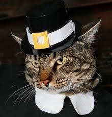 cat pilgrim