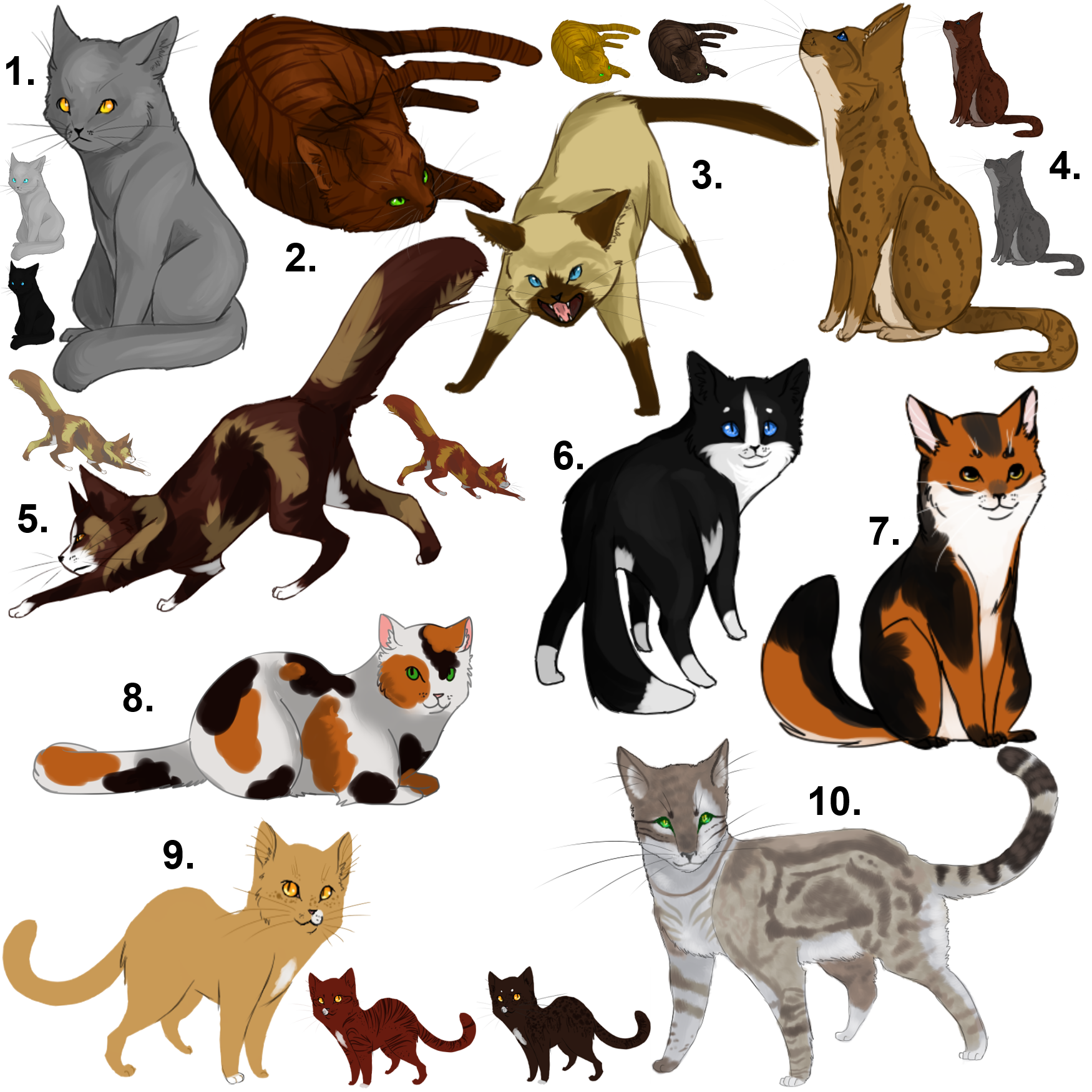 Cat Color Patterns Awesome Design Ideas