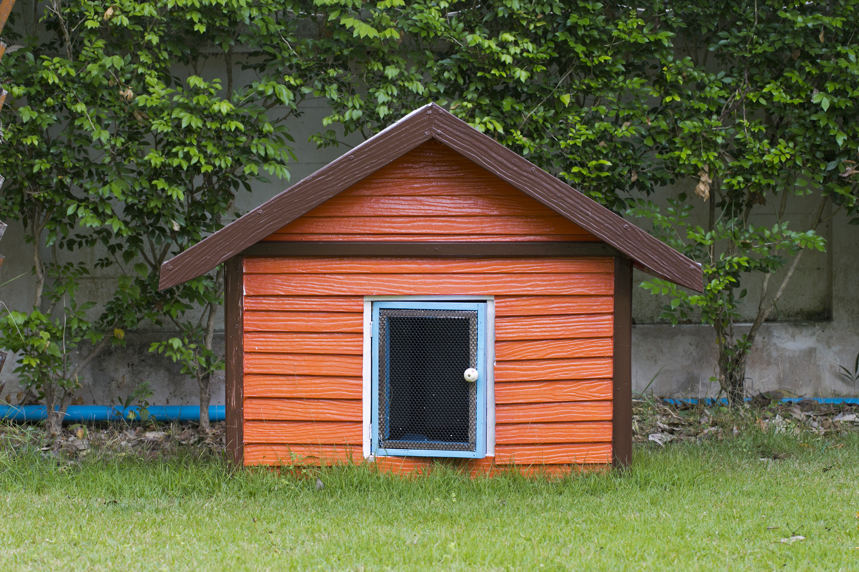 How to build a dog house or dog kennel for Build a home