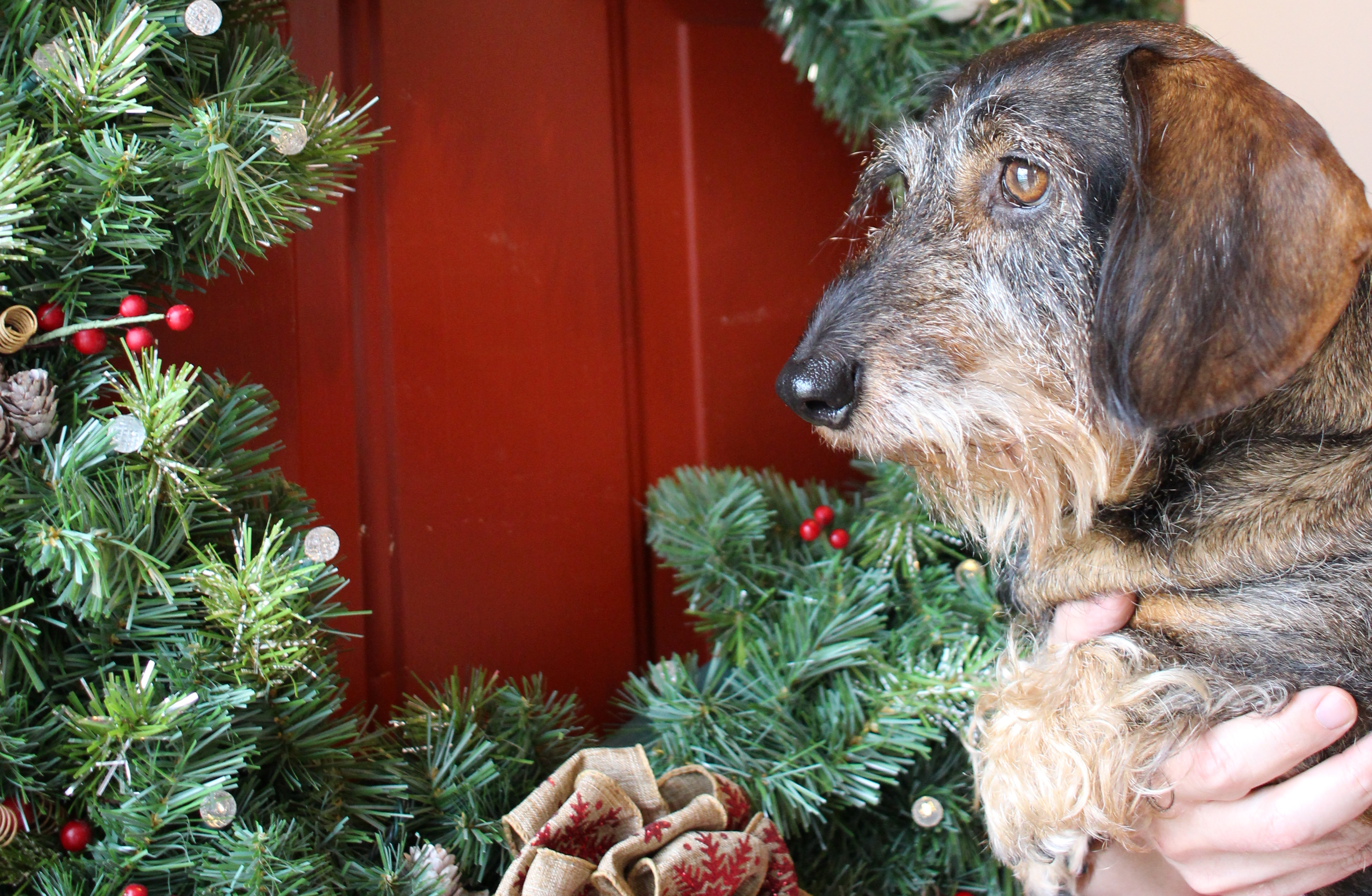 3 Christmas Gifts for Pet Sitters and Dog Walkers