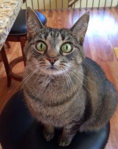 cat-sitter-brookfield