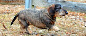 Dog Walking Bayview Milwaukee