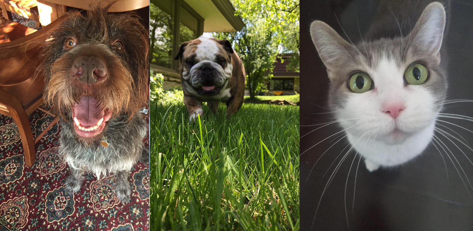 Milwaukee Dog Walker Pet Sitter