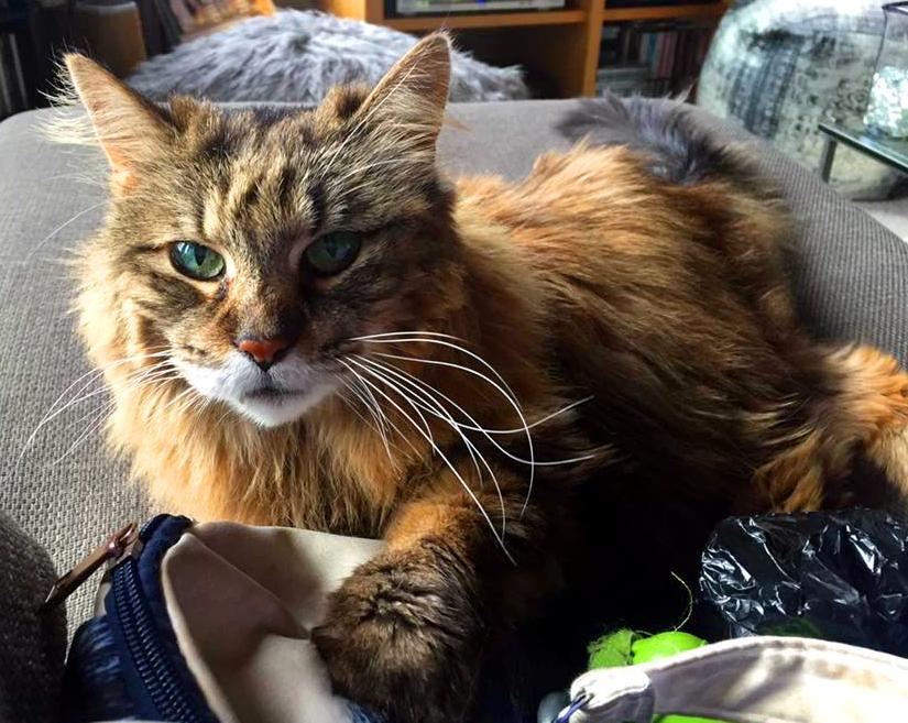 Cat Sitter in Milwaukee near me
